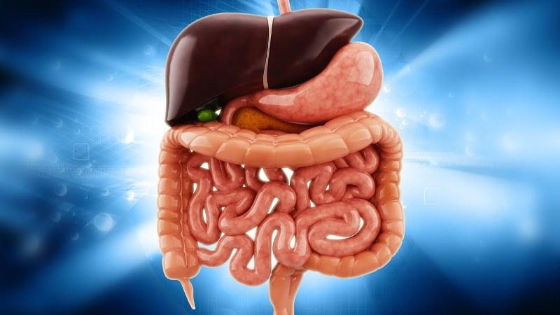 Hangi Organ İçin Nasıl Bir Detoks Uygulanmalı?